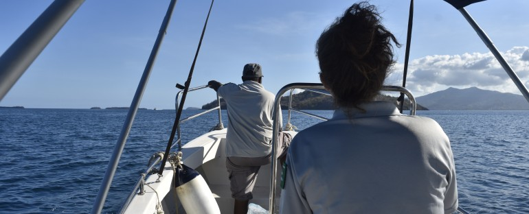 Recensement des oiseaux communs sur l'îlot M'Bouzi